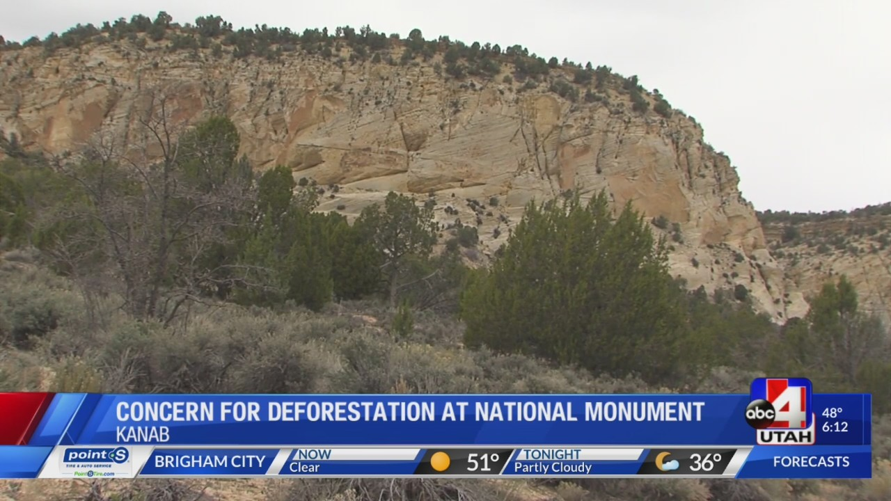 Scientists and researchers express concern about Grand Staircase deforestation