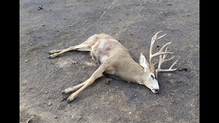 $2,000 Reward Offered in Sevier County Poaching Case